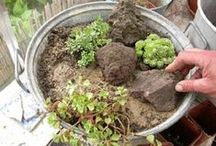 Mon coin de verdure ! My patch of greenery !