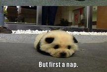 Panda Stuff / Ummm...all panda related things I find