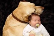 Chien préféré - Favorite dogs / un jour peut-être... one day maybe...