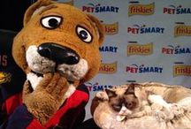 Adventures with Stanley C. Panther / Check and see what Stanley and I are up to at BB&T Center and south Florida!