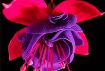 Flowerryyy