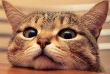 CATS photos / CATS photos, фотографии кошек, котов, котят, котиков
