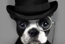 Lustiger Hundekram