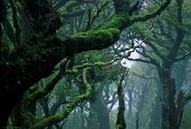 Trees I love.