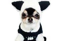 Furry Friends / Dogs & Cats, Indoor-Outdoor Pets