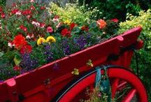Bouquets~Flowers~Gardens
