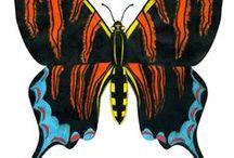 Butterfly Frenzie