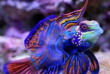 Under Water World / Sea and Ocean Life
