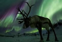 Photos / Northern Lights / A handpicked collection of inspiring northern lights photography (Aurora Borealis) from Iceland, Norway, Finland, Canada and Greenland. // Take a look at my other photography and design related boards for more inspiration.
