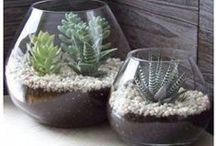 misc   nature indoors