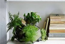 Plants & Gardening / Lots of ideas for plants, including indoor gardening and houseplants. Plus Ideas for buying and creating your own mini terrarium gardens.