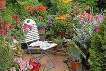 Garden Inspiration / Ideas for plants and décor for the garden, to help you make your garden your own.