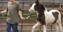 Horse Health Care / Rapid Results for Scratches, Fungus, Rain Rot, Cuts & Thrush.