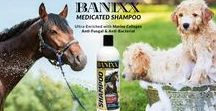 Banixx Medicated Shampoo / Introducing NEW Banixx® Medicated Shampoo, Ultra-enriched with Marine Collagen; a safe, effective skin treatment for all horses (and dogs!) in the recovery of multiple anti-fungal & anti-bacterial skin conditions.