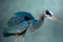 A paradise of birds
