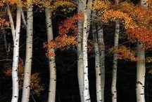 Trees / by Carol Boyer