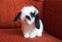 Bunnies *-*