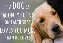 Doggy quotes / Quotes about dogs