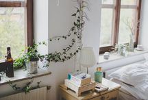 Plants inside / Houseplants
