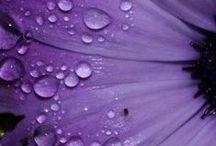 ::: A splash of COLOUR