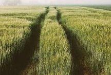 ::: The Long Way Home ::: / Wanderlust