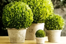 Fun with Boxwood and more..