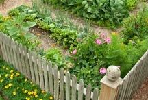Gardening Vegetables / Yummy veggies!