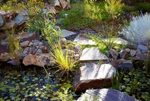 Gardening Water Gardens / The soothing sounds of water. / by Missy Arbour