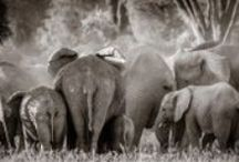 Elephants as big as Whales