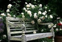 Garden Benches & Swings / Take a load off and smell the roses.