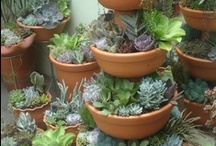 Pot plants / by Jane Leask