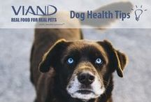 Dog Health Tips / Health tips to keep your dog at his peak wellness  http://www.viandpet.com/