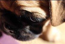 Pug loving  / by Claire Carmichael