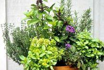 Garden / Tips til hagen
