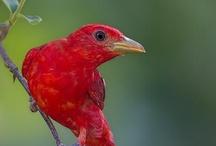 Birds / by Donna Kriskovich