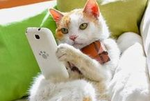 funny cats love