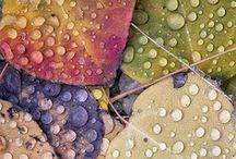 Rain / I love rain...