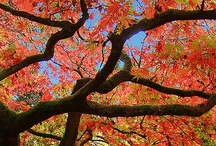 Awe-Inspiring Autumn / Autumn is a second spring when every leaf is a flower. —Albert Camus