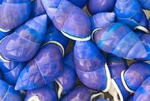 Seashells / Love collecting shells! / by Carol Berry