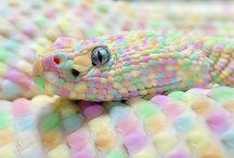 Snakes/Serpientes