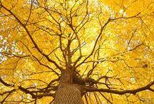 stromy, větve