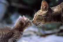 láska, přátelství