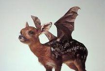 Animals and hybrids