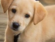 Dogs / All things Dogs. Find everything from cute dog pictures, dog articles and helpful dog infographics. Pet Crates Direct |https://www.petcratesdirect.com/