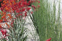 Native Plants / A series of native Australian plants that grow well in South East Queensland and Brisbane