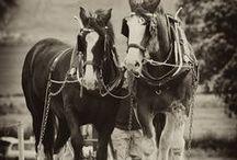 Horses / by Josi Dreher