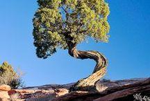 Inspirace k fotografování - Stromy