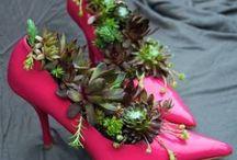 Tracie's garden / Cacti & succulents