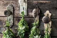 Herb-alicious / From growing to drying to saving them for projects, all the lovely things about herbs.