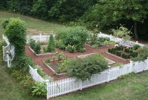 Food Garden / by B Barlup